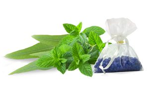 Peppermint/Eucalyptus in our Aromatherapy Feature